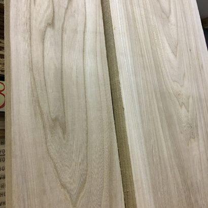 grey american elm