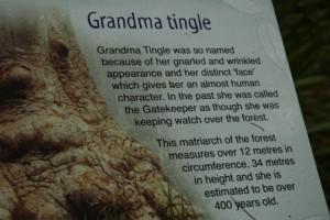 grandma tingle