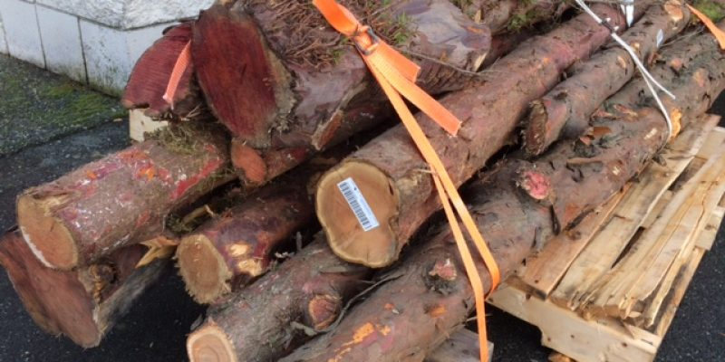 Yew Logs – Just in!