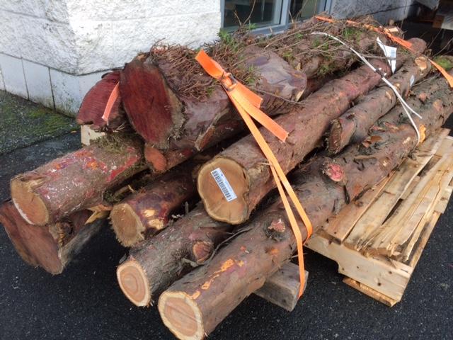 Yew Rounds West Wind Hardwood