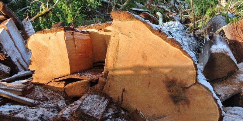 Jan's Day Off: Fallen Timber